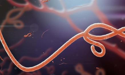 """WHO: Killer-Pandemie """"X"""" könnte morgen beginnen und zu 33 Millionen…"""